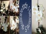 mi orquidea